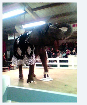 Performing circus elephant 2